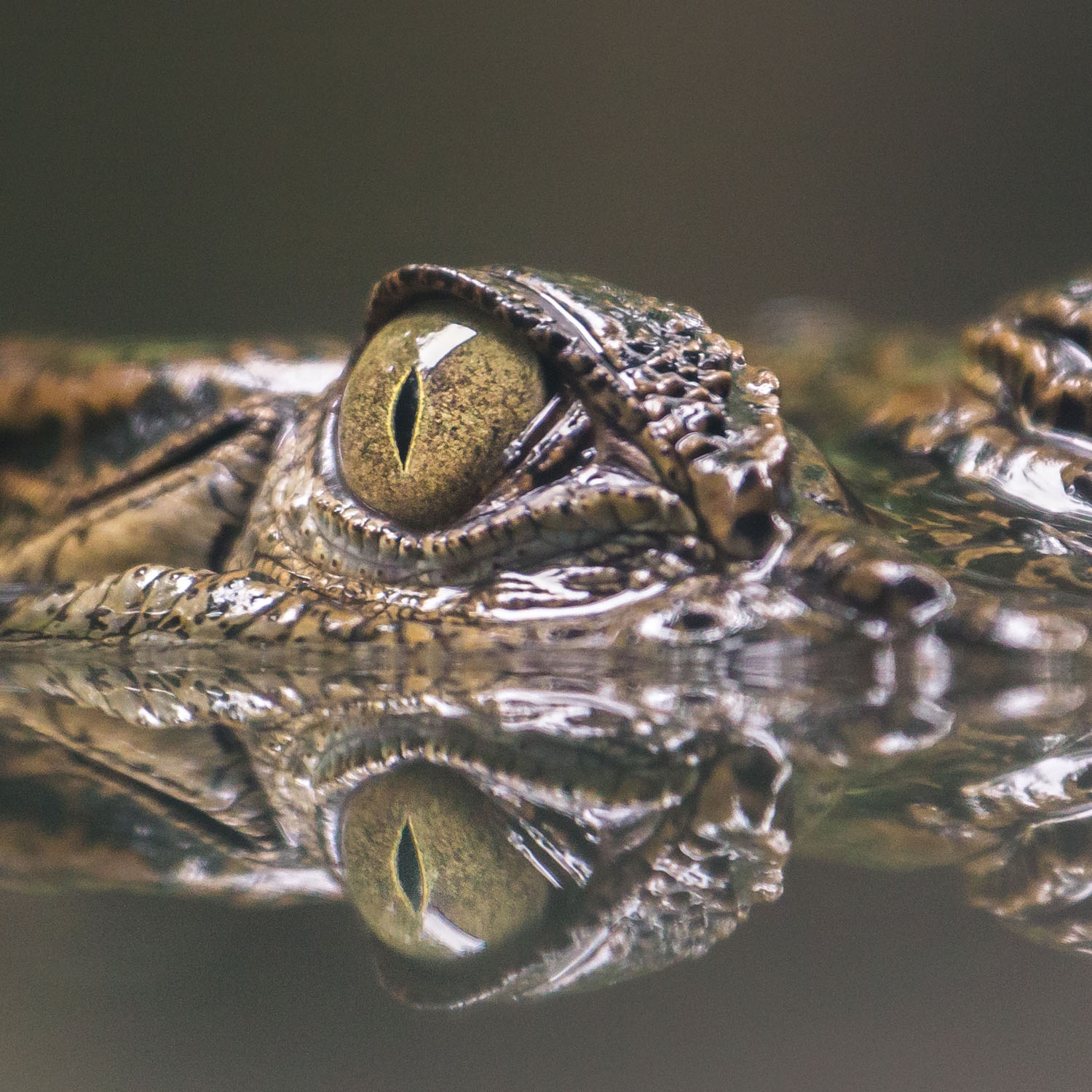 the gator tracking solution